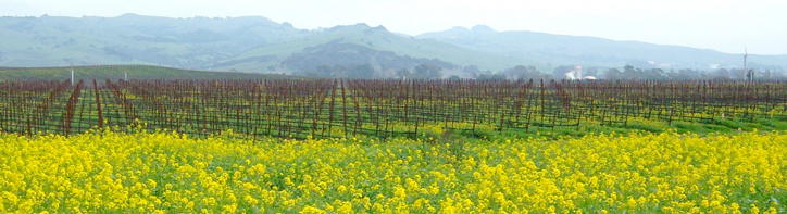 The weather in Napa Valley is ideal, whether you visit in Spring, Summer Winter of Fall