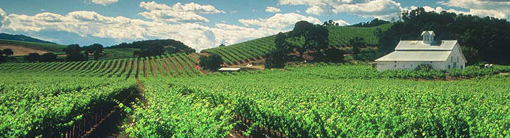 Sonoma Valley Wineries during your stay at Golden Haven Hot Springs